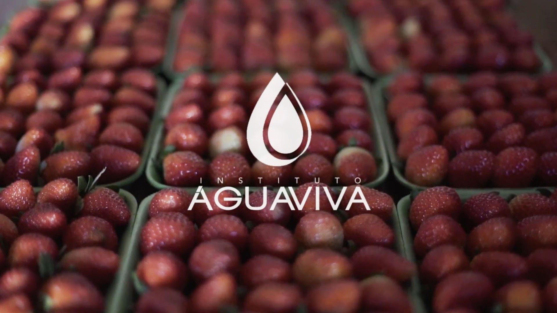 Foto notícia - Instituto Água Viva – Projeto Morango